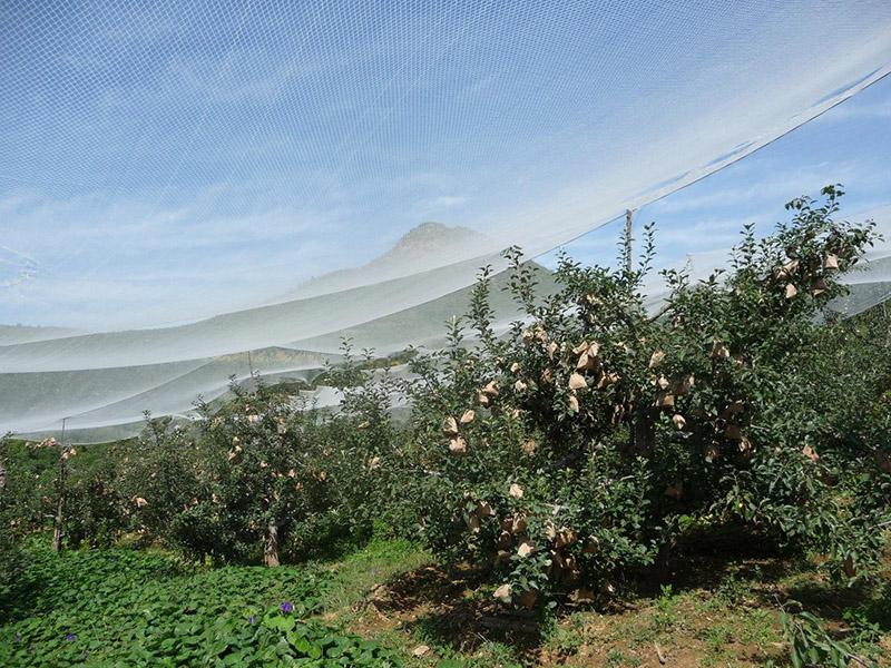 果蔬防雹网